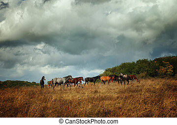 The herd of horses