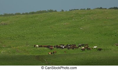 The herd of horses on the pasture