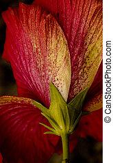 The Hibiscus Underside