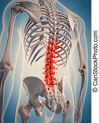 the highlighted spine