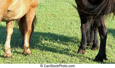The hindquarters with two waving tails on a lawn