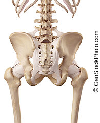 The hip ligaments - medical accurate illustration of the hip...