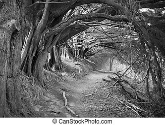 The Hollow Alley