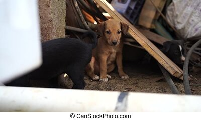 The homeless little puppies in a junkyard