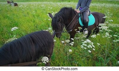 The horse eating grass in front of female rider on horseback in the field