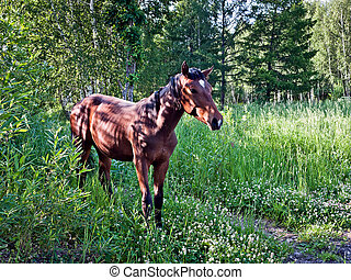 The horse in the woods