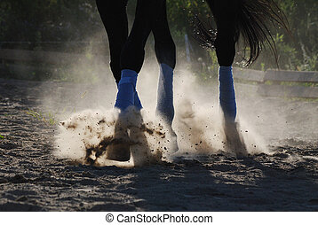 The horse is galloping along the sand. Raises the sand hoofs. Hooves. Dressage