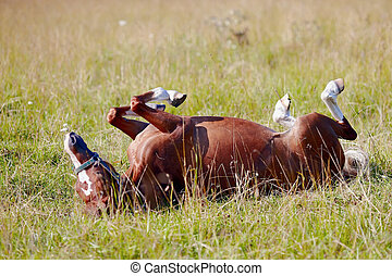 The horse rolls on a grass.