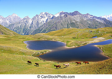 the horse walking on the grass near the lake with mountains in the background