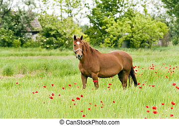 The horses graze outdoors in a flow