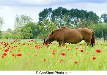 The horses graze outdoors in a flowering meadow.