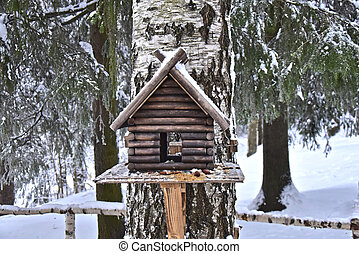 the house eating birds in winter forest
