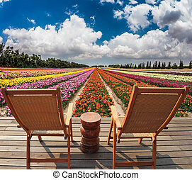 The huge field of flowers - Two convenient chaise lounges...