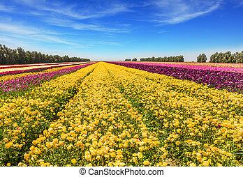 The huge field