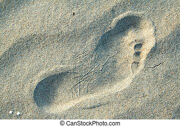 The human foot on the sand 1