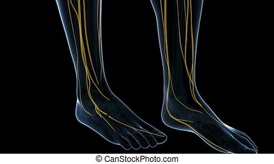 Animation showing the human nerve system