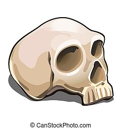 The human skull isolated on white background. Sample of the poster, invitation to the Halloween holiday and other cards. Vector illustration.