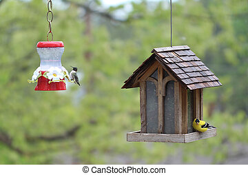 A Hummingbird and an American Goldfinch take a break to grab a meal at a pair of bird feeders one fine spring morning.