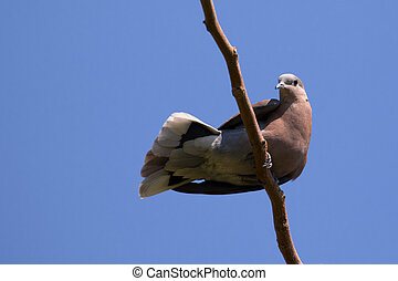 The image of a dove perched
