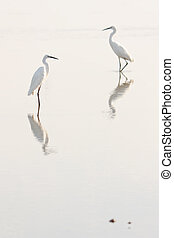 The image of egret and flamingo