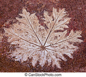 The Imprint leaf on cement floor