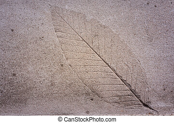 The Imprint of leaf on cement ground background