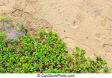 The imprint of the traces of the traveler's shoes on the taiga sand in the forest of Yakutia next to the bushes of berries and small branches of green firs.