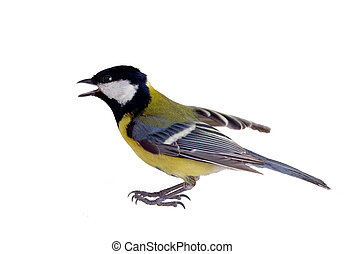the inspired titmouse 2