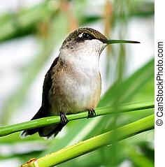 The Intelligence of Hummingbirds