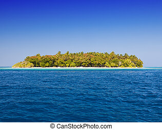 The island with palm trees in the ocean