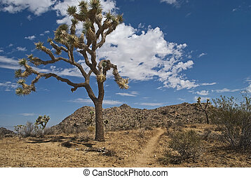 The Joshua tree in the foreground is part of the landscape of Joshua Tree National Park in Southern California.