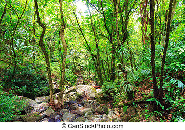 The jungle of El Yunque