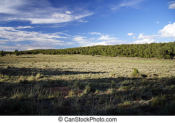Kaibab National Forest - The Kaibab National Forest near the...