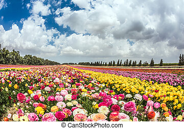 The kibbutz on the border with Gaza Strip - Huge field of...