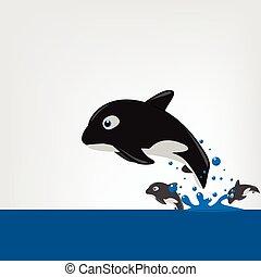 The killer whale (Orcinus orca) Vector illustration.