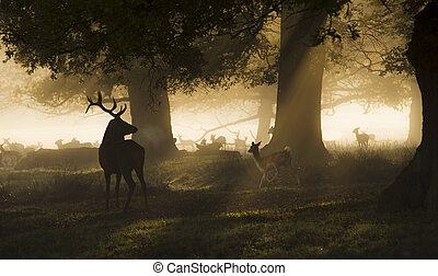 Male red deer looking a group of fallow deer running