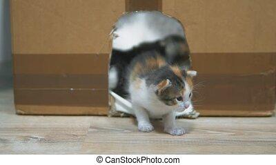 the kitten falls. cat licks the kitten. Little kittens in...