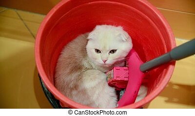 The kitten lies in bucket with a mop