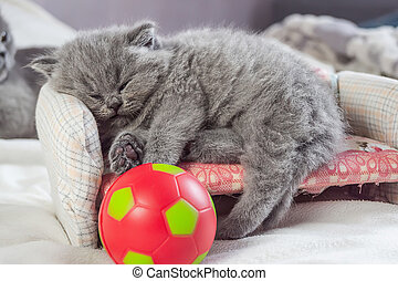 kitten plays with a ball