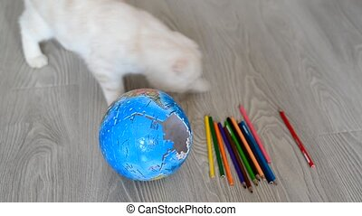 kitten plays with colored pencils and broken globe