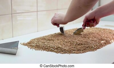 The laboratory worker selects the grain for a sample.