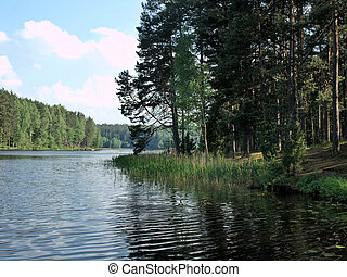 The lake in forest