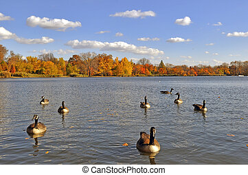 The Lake in the Park with geese