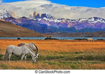 The landscape in the park Torres del Paine - Lake Laguna...