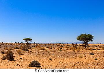 landscape in the Sahara desert