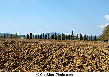 The landscape of the Tuscany. Italy
