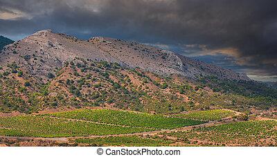 Landscape vineyard on the hillside at sunset