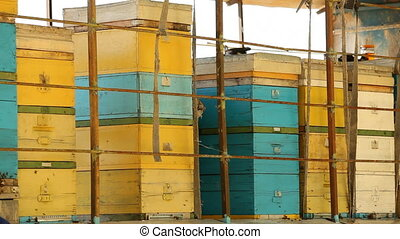 The large apiary