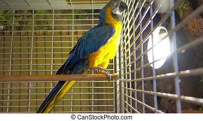 Large beautiful parrot
