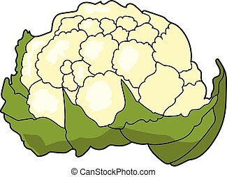 The large cauliflower on a white background.